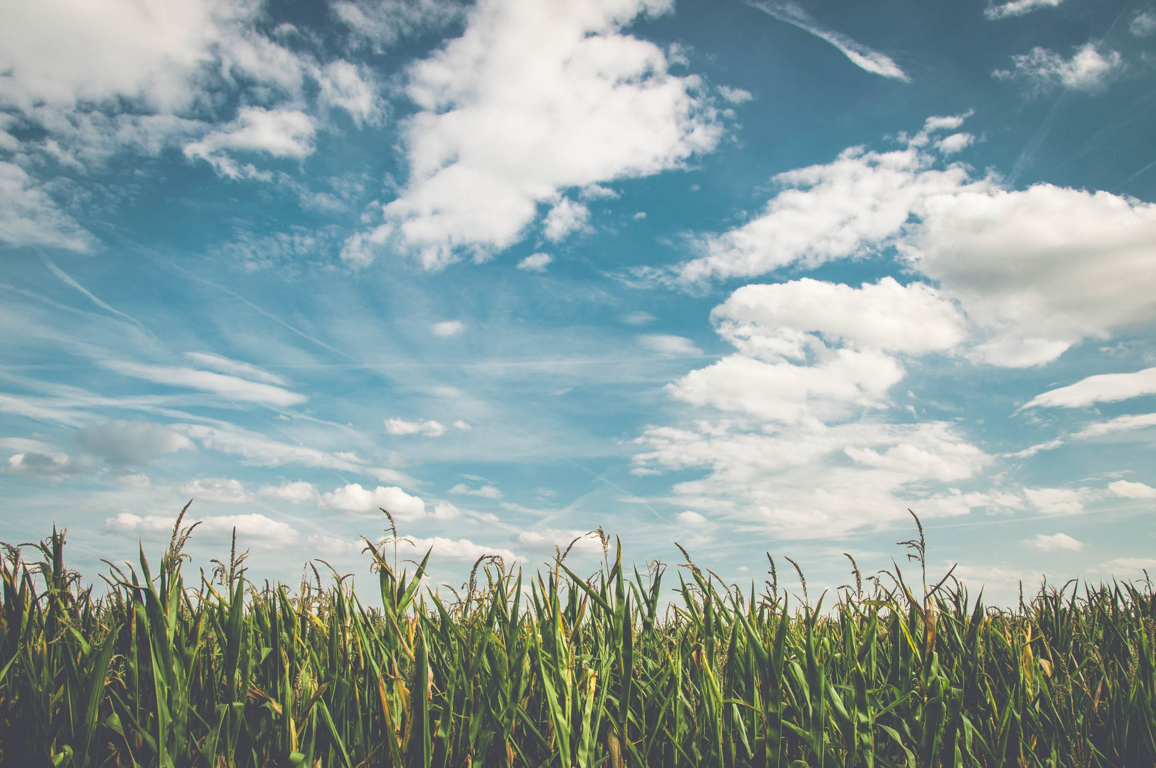 """6.3.1. """"Potpora razvoju malih poljoprivrednih gospodarstava"""""""