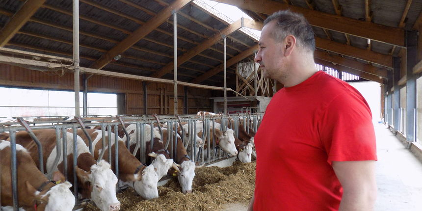 Strategija poljoprivrede mora definirati kako postići proizvodnju 600 milijuna kg mlijeka