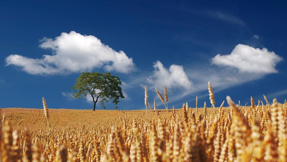 HPK poziva Vladu da zaštiti poljoprivrednike